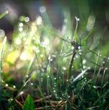 Gräs droppe, friskhet, naturlig bakgrund är grönt Fotografering för Bildbyråer