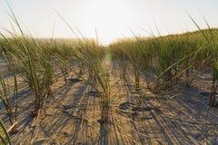 Gräs dyn, afton, solnedgång fotografering för bildbyråer