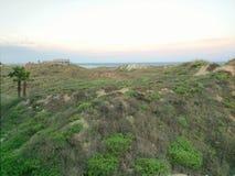 Gräs- dyn på gryning Arkivbilder