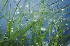Gräs efter regnar royaltyfri foto