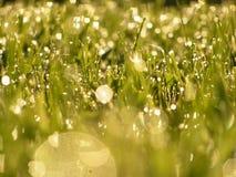 Gräs efter regnar royaltyfria bilder