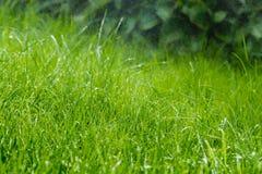 Gräs efter regnar Royaltyfri Fotografi