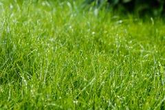 Gräs efter regnar Royaltyfri Bild