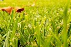 Gräs en D-äng på Sunny Day royaltyfri bild