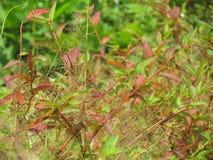 Gräs en variation av färger tillsammans Fotografering för Bildbyråer