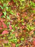 Gräs en variation av färger tillsammans Arkivfoton