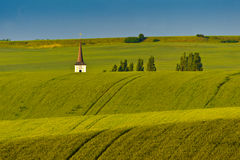 Gräs- fält Royaltyfri Fotografi