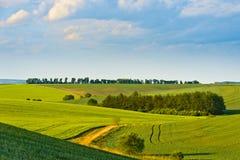 Gräs- fält Royaltyfria Foton