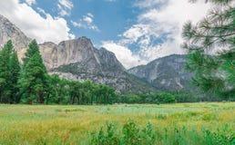 Gräs- fält för Yosemite dalsommar Royaltyfri Foto