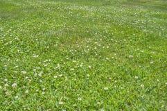 Gräs- fält HDR Royaltyfri Foto