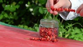 Gräs för böjelse för jordgubbe för skog för manhandpärla rött löst lager videofilmer