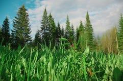 Gräs för blommor för naturskogträd Arkivbild
