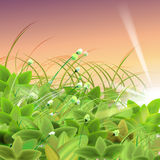Gräs för grön gås Fotografering för Bildbyråer
