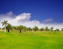 Gräs för Gran Canaria Meloneras golfgreen Royaltyfria Bilder