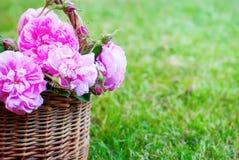 Gräs för hundRose Pink Rosa Canina Flowers korg Royaltyfria Bilder