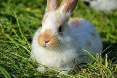 Gräs för kaninmatning in i vår Gulligt kanintuggninghö i trädgård Traditionellt påsksymbol Arkivfoton