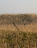 Gräs för sen sommar Arkivfoton