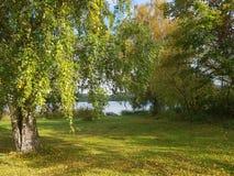 Gräs för sjön för träd för nedgången för den Sverige naturhösten lämnar den blåa solen för himmel Royaltyfri Foto