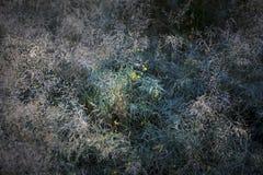 Gräs för Yosemite daläng Arkivbild