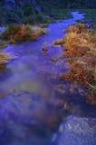 gräs- flodstrand för skymning Arkivbilder