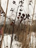 Gräs från vinter royaltyfria bilder