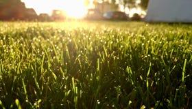 Gräs fuktigt med dagg arkivbilder