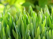 gräs görar grön texturbarn Arkivbilder