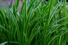 gräs- gräs Arkivbilder