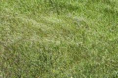 Gräs- grönt ljus för fältdag arkivfoto