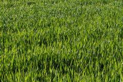 gräs grönt naturligt arkivfoto
