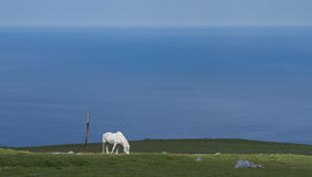 gräs hästhavet Arkivfoton