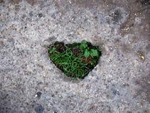 gräs- hjärta Royaltyfri Foto
