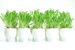 Gräs i ägg Royaltyfria Foton