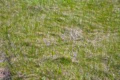 Gräs i ängen Royaltyfria Bilder