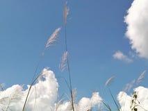 Gräs i dag för molnig himmel royaltyfri foto