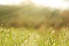 Gräs i dagg med suddigheta trees i bokeh Arkivfoto