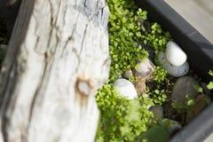 Gräs i en blomkruka Fotografering för Bildbyråer