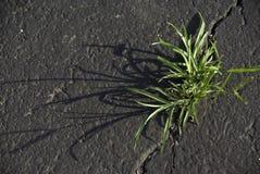 Gräs i en spricka Royaltyfri Bild