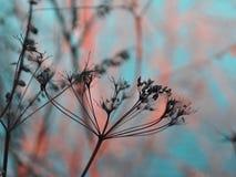 Gräs i ett fält mot inställningssolen försiktig solnedgång i vintern Arkivfoton