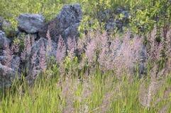 Gräs i ett solljus Arkivfoton