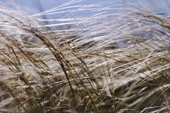 Gräs i fält på sommarbakgrund eller textur arkivbilder