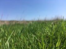 Gräs i himmelperspektivet arkivbild