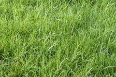 Gräs i Januari Arkivbilder