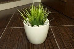 Gräs i krukan royaltyfri foto