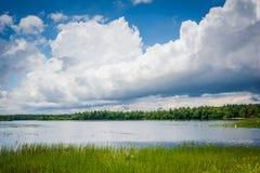 Gräs i Massabesic sjön, i kastanjebrunt, New Hampshire Arkivfoto