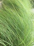 Gräs i min trädgård arkivbilder