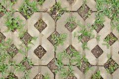 gräs i mitt hem Arkivfoto