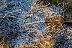 Gräs i morgonen Arkivfoto