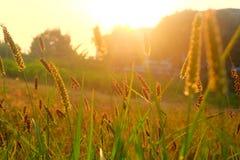 Gräs i morgonen fotografering för bildbyråer