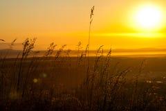 Gräs i morgonsolen Arkivfoton
